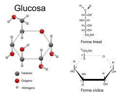 que es la glucosa